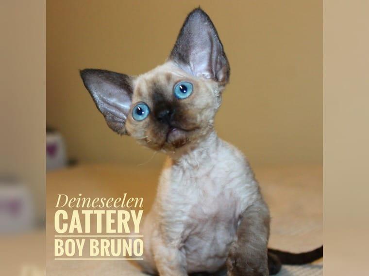 Suche nach Tag: kitty blair