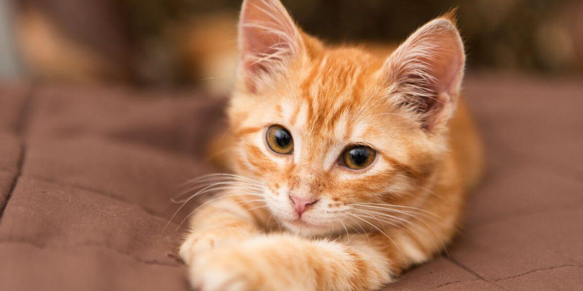 Kleine katze kennenlernen [PUNIQRANDLINE-(au-dating-names.txt) 42