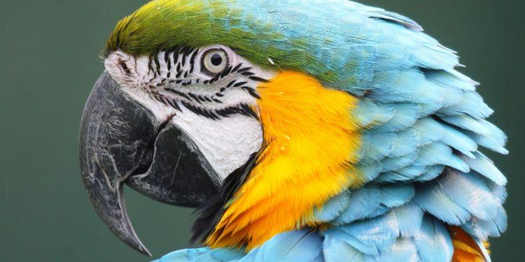 Artenschutz Fur Diese Tiere Benotigt Ihr Cites Eg Papiere Deinetierwelt Magazin