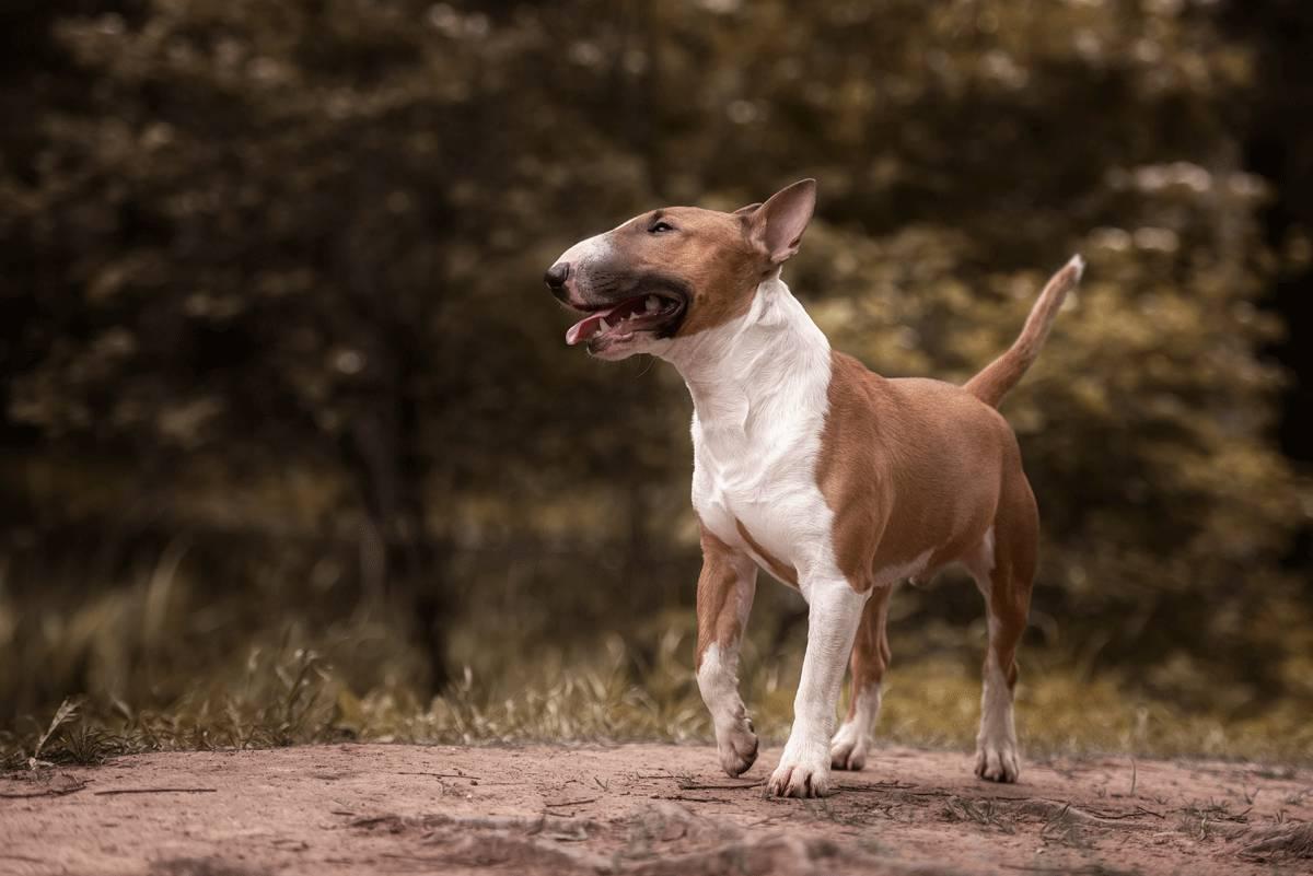 Hundegesetz In Sachsen Deinetierwelt Magazin