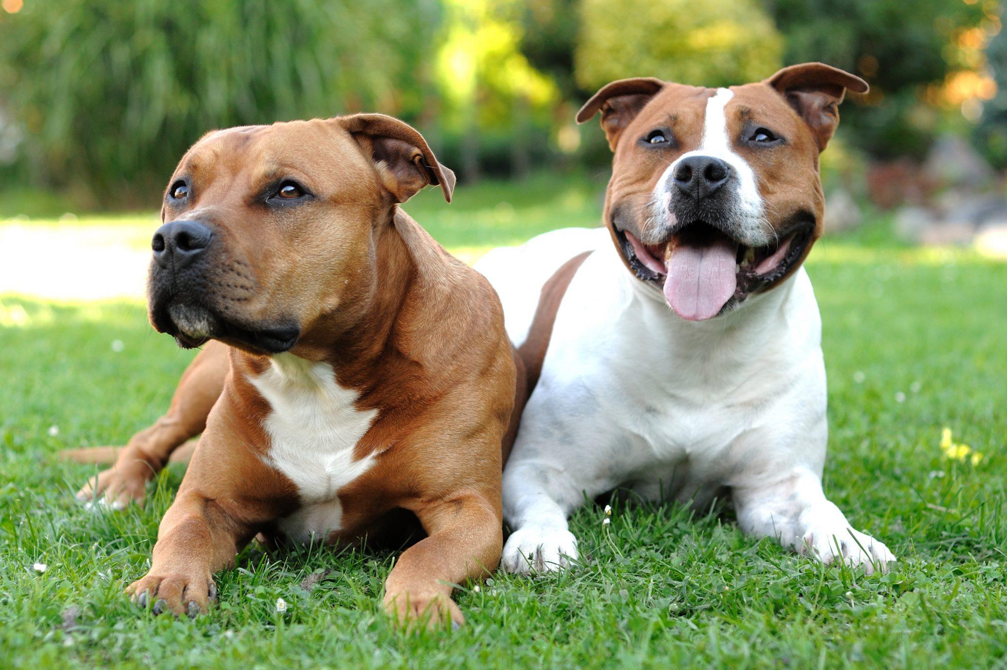 Hundeverordnungen Der Einzelnen Bundeslander Auflagen Fur Listenhunde Deinetierwelt Magazin