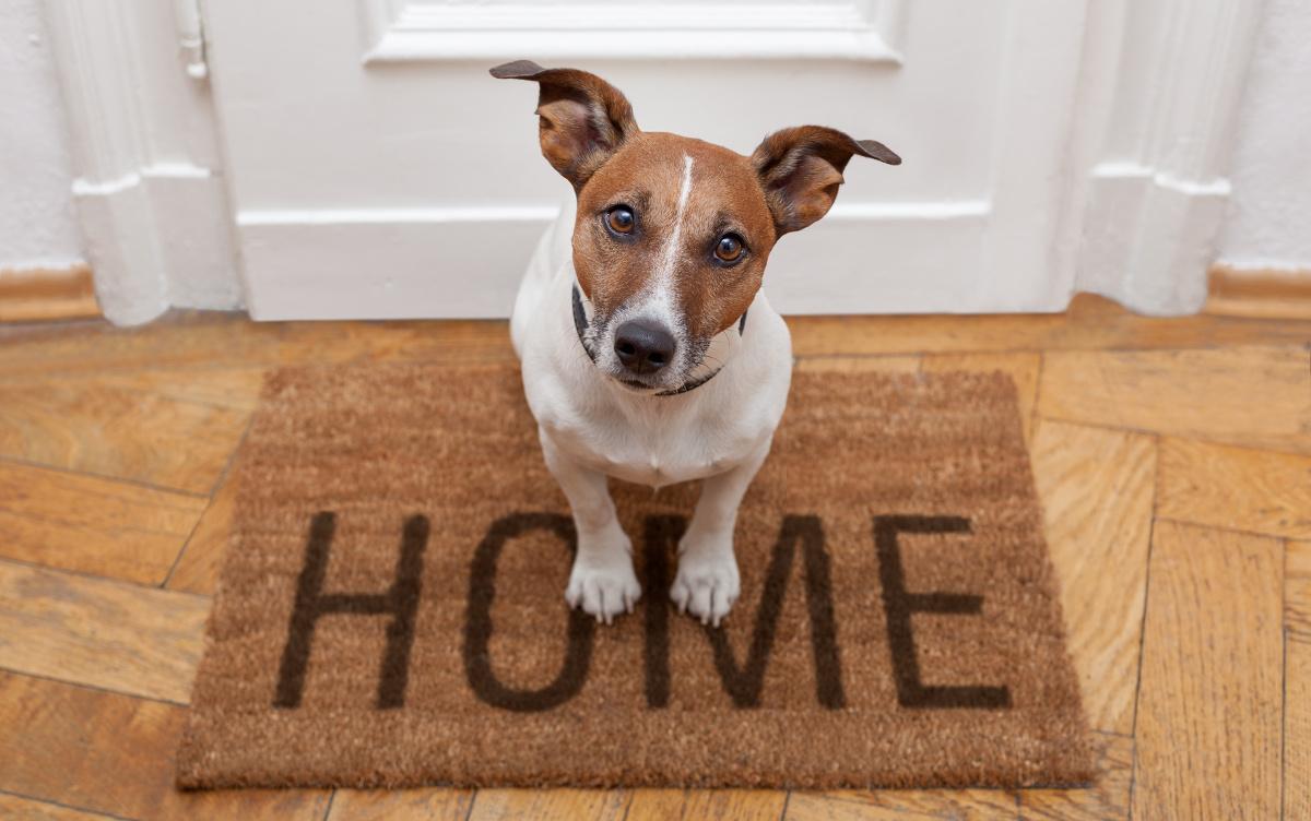 Haustiere Im Mietrecht Darf Der Vermieter Die Tierhaltung Verbieten