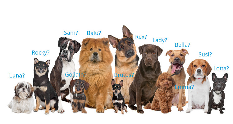 Beliebte Hundenamen Weiblich