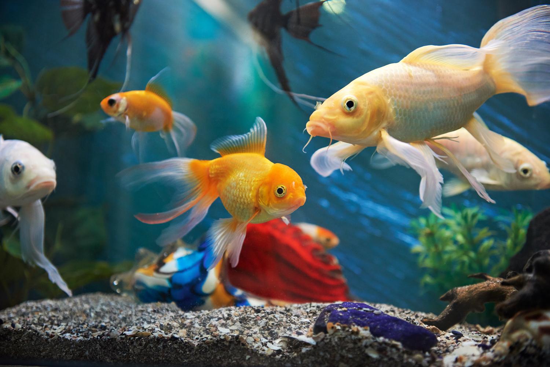 5 Fische