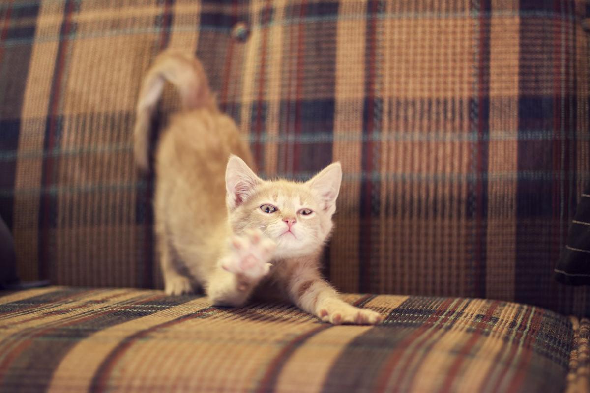 Katzenerziehung Was Tun Wenn Die Katze Am Sofa Kratzt
