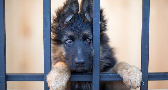 Welpen Aus Dem Tierheim Und Tierschutz Funf Wichtige Infos Deinetierwelt Magazin