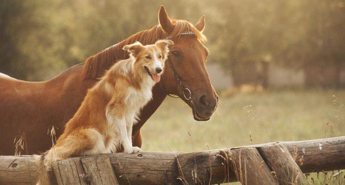 hund und pferd aneinander gewöhnen so geht's