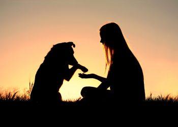 Könnten Hunde eigentlich ohne den Menschen überleben?