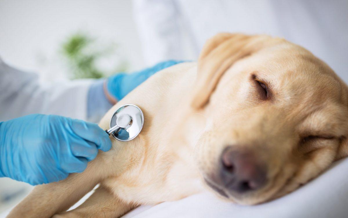 Die Häufigsten Hundekrankheiten Symptome Und Behandlung