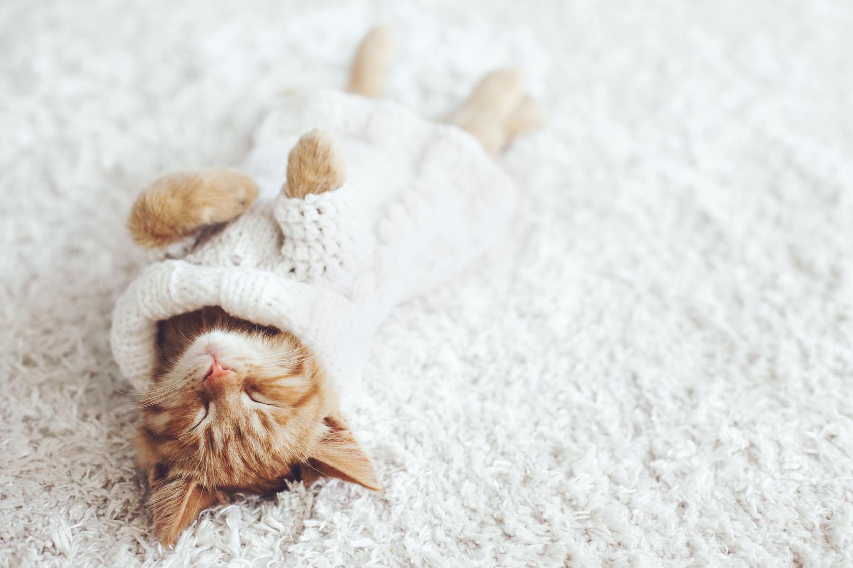 Grundlegendes zur Kittenpflege & Kittenfütterung - DeineTierwelt Magazin