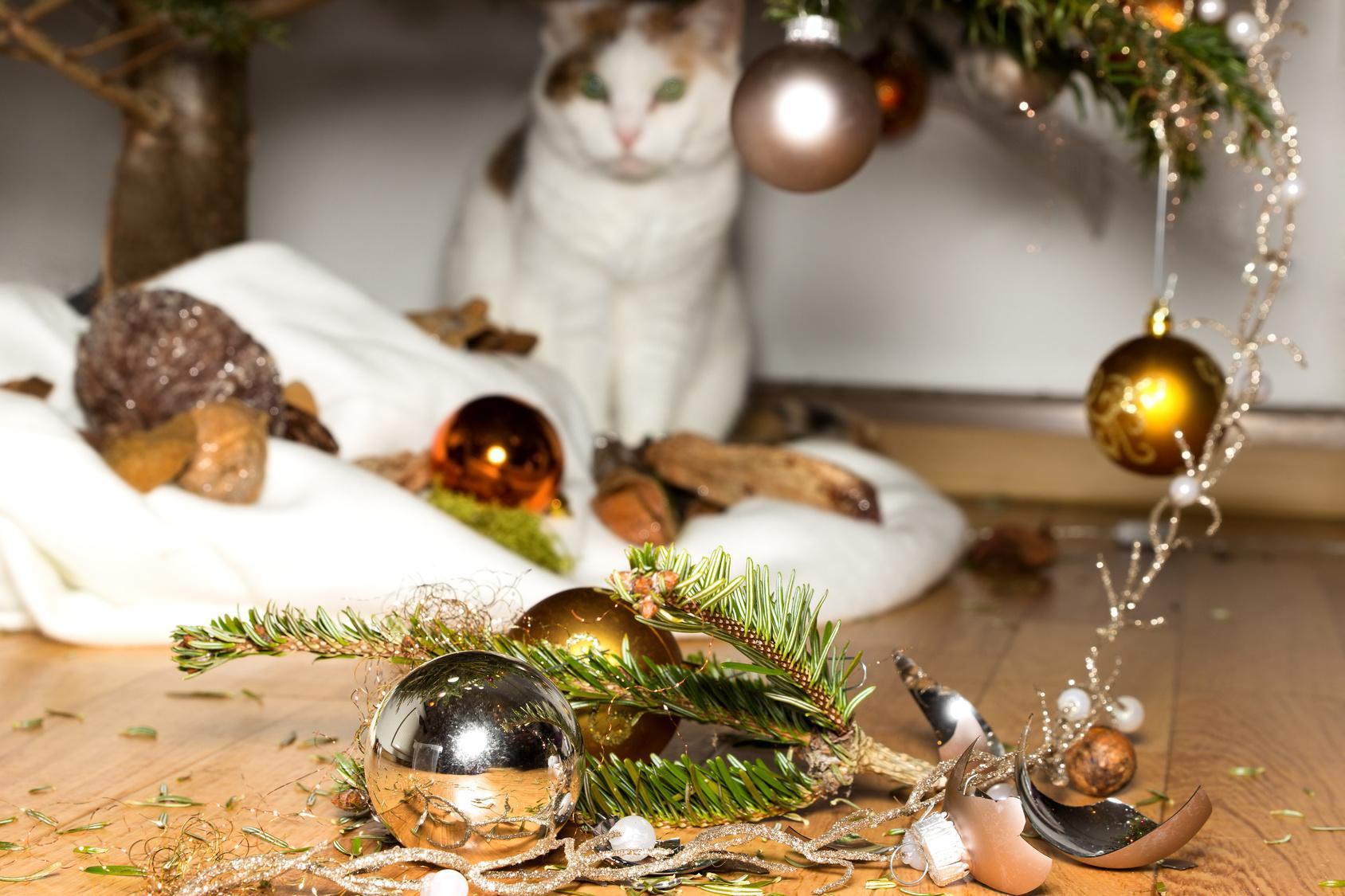 Gefahren für Tiere in der Weihnachtszeit - DeineTierwelt Magazin