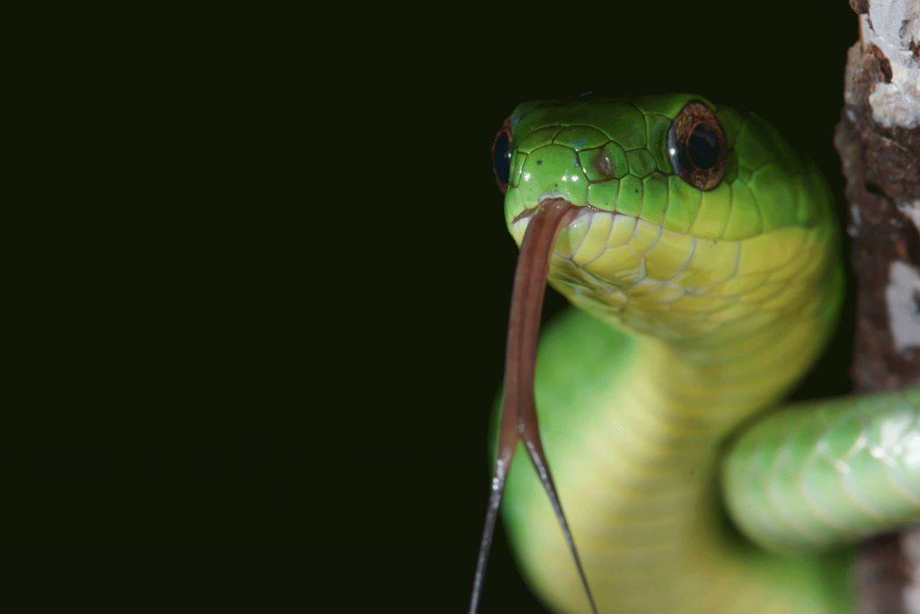 Die Sinne der Schlangen - DeineTierwelt Magazin