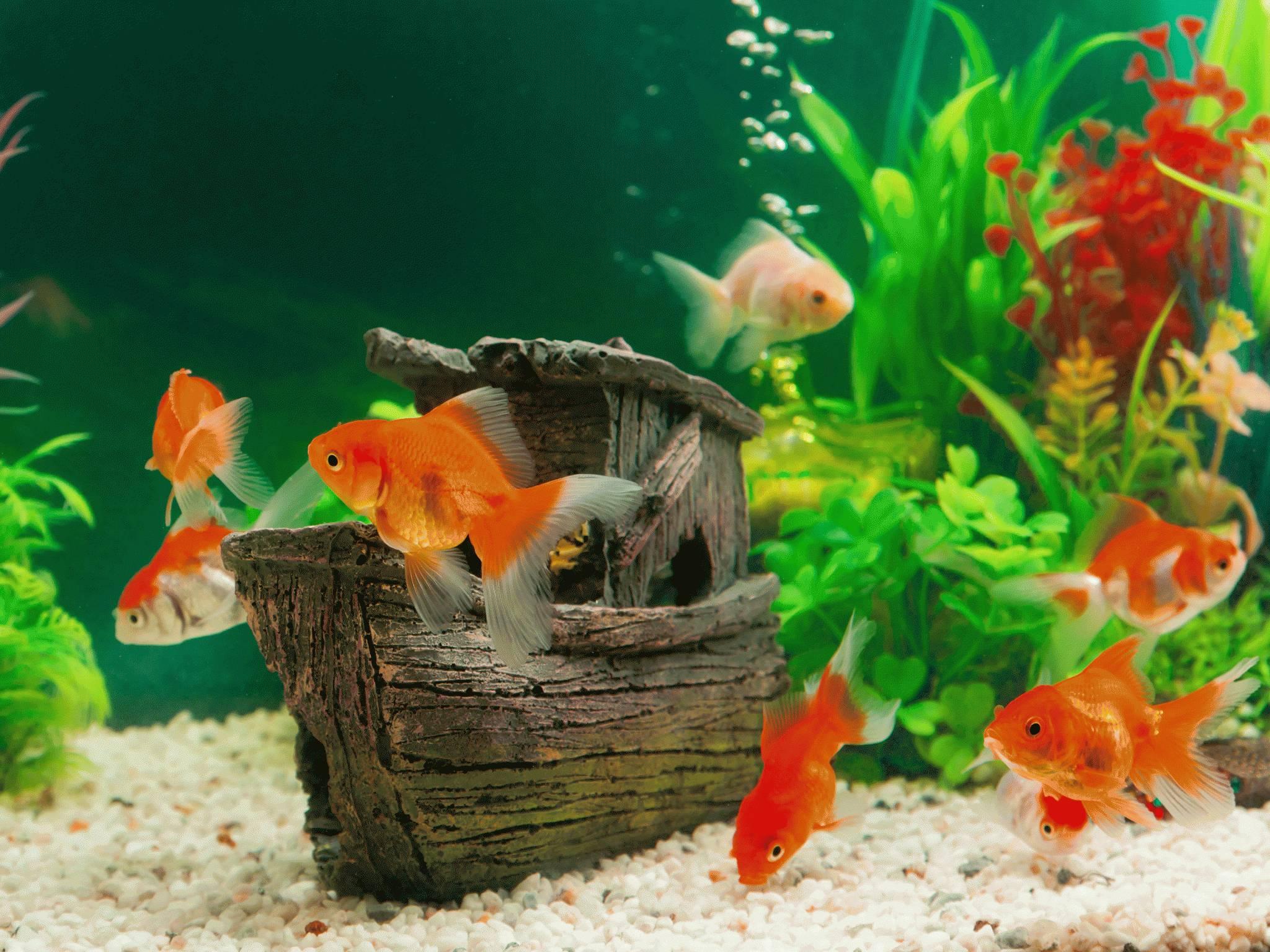 Tipps Fur Euer Aquarium Deinetierwelt Magazin
