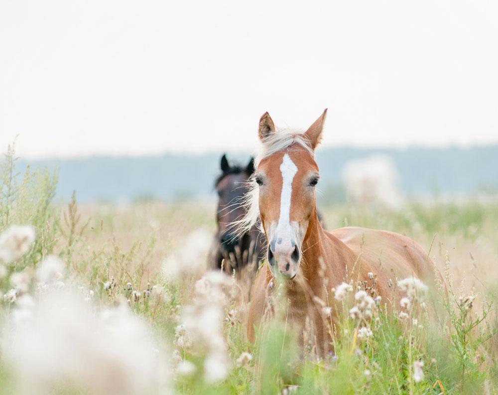 Pferde Im Tv
