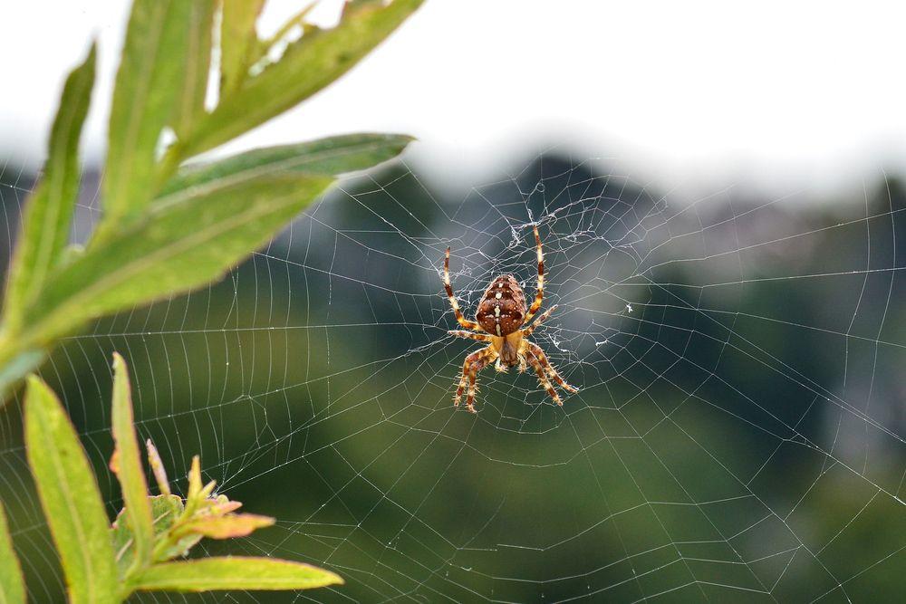 haben spinnen ohren