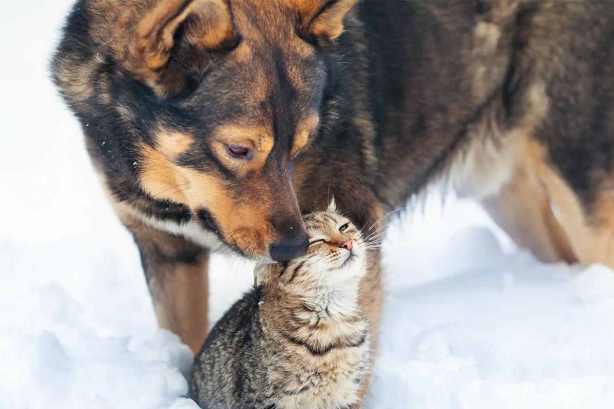 Immunsystem Von Hunden Und Katzen Stärken Deinetierwelt Magazin