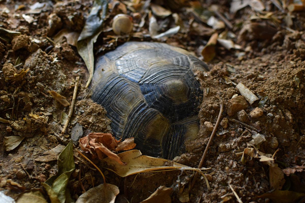 Kleiner Kühlschrank Für Schildkröten : Einige schildkröten brauchen ihre winterruhe