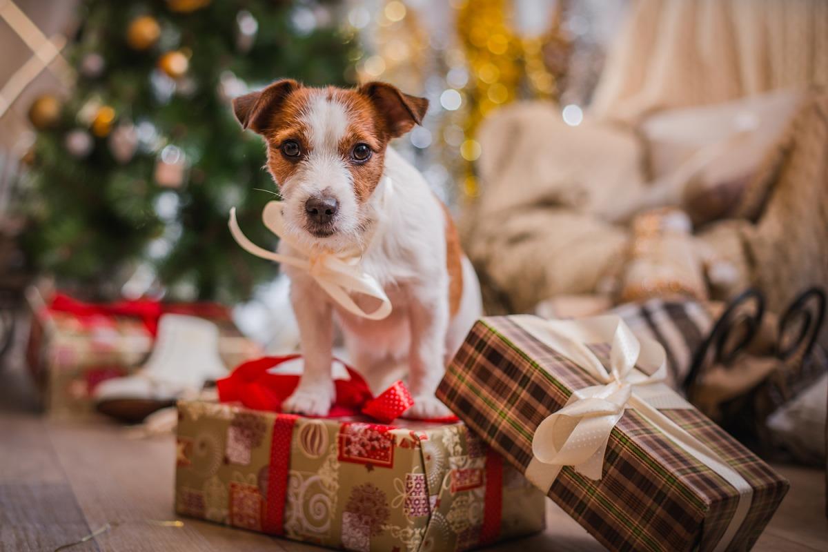 Tierfreundliche Weihnachten - DeineTierwelt Magazin