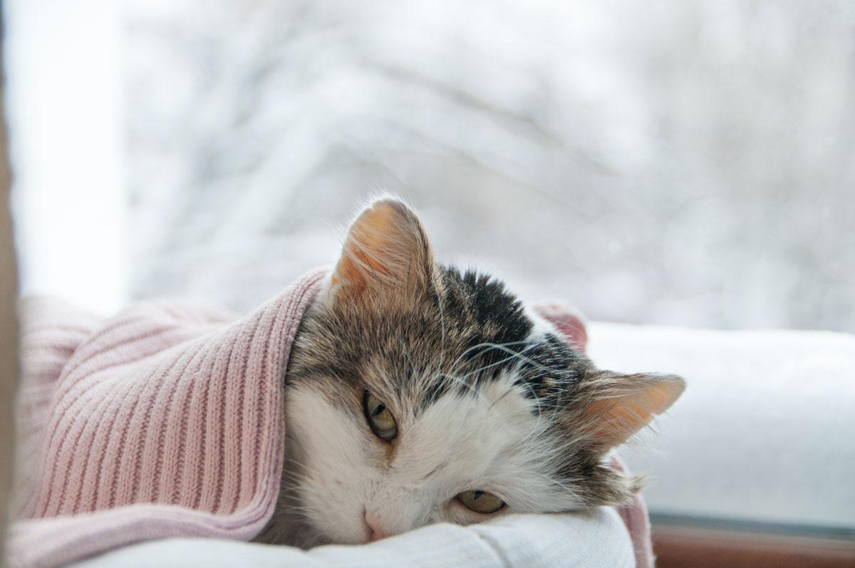 Katzenschnupfen Das Solltet Ihr Wissen