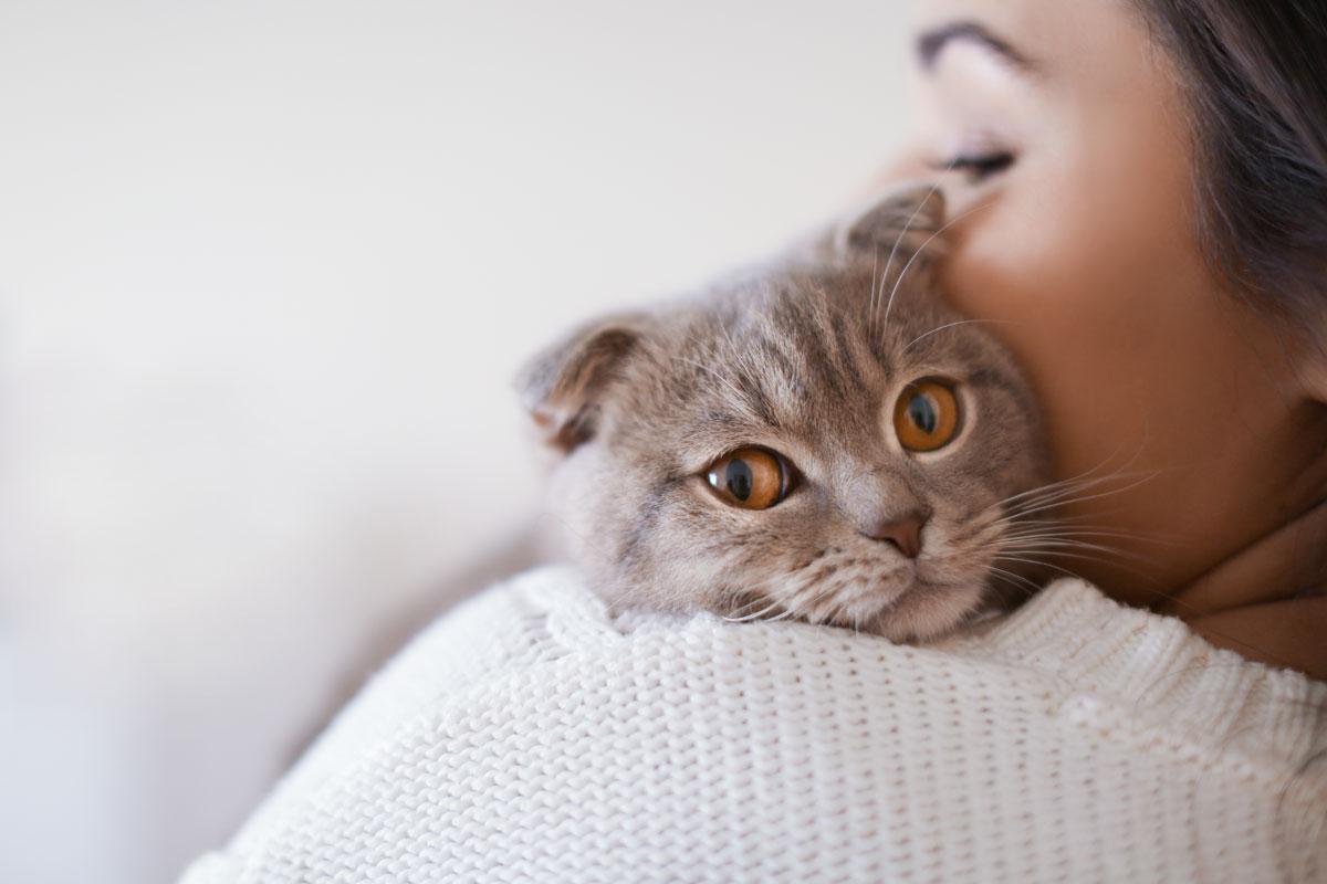 Das 1x1 Der Katzenerziehung Darauf Solltet Ihr Achten