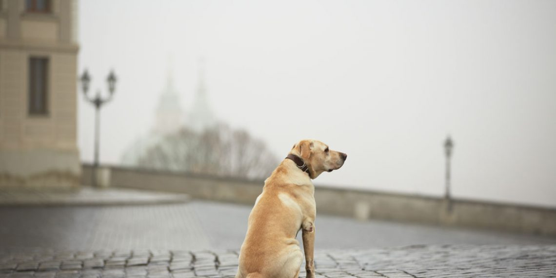Hund Entlaufen Was Tun