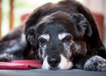 Demenz bei Tieren: Ist Dein Hund bloß alt oder steckt mehr dahinter?