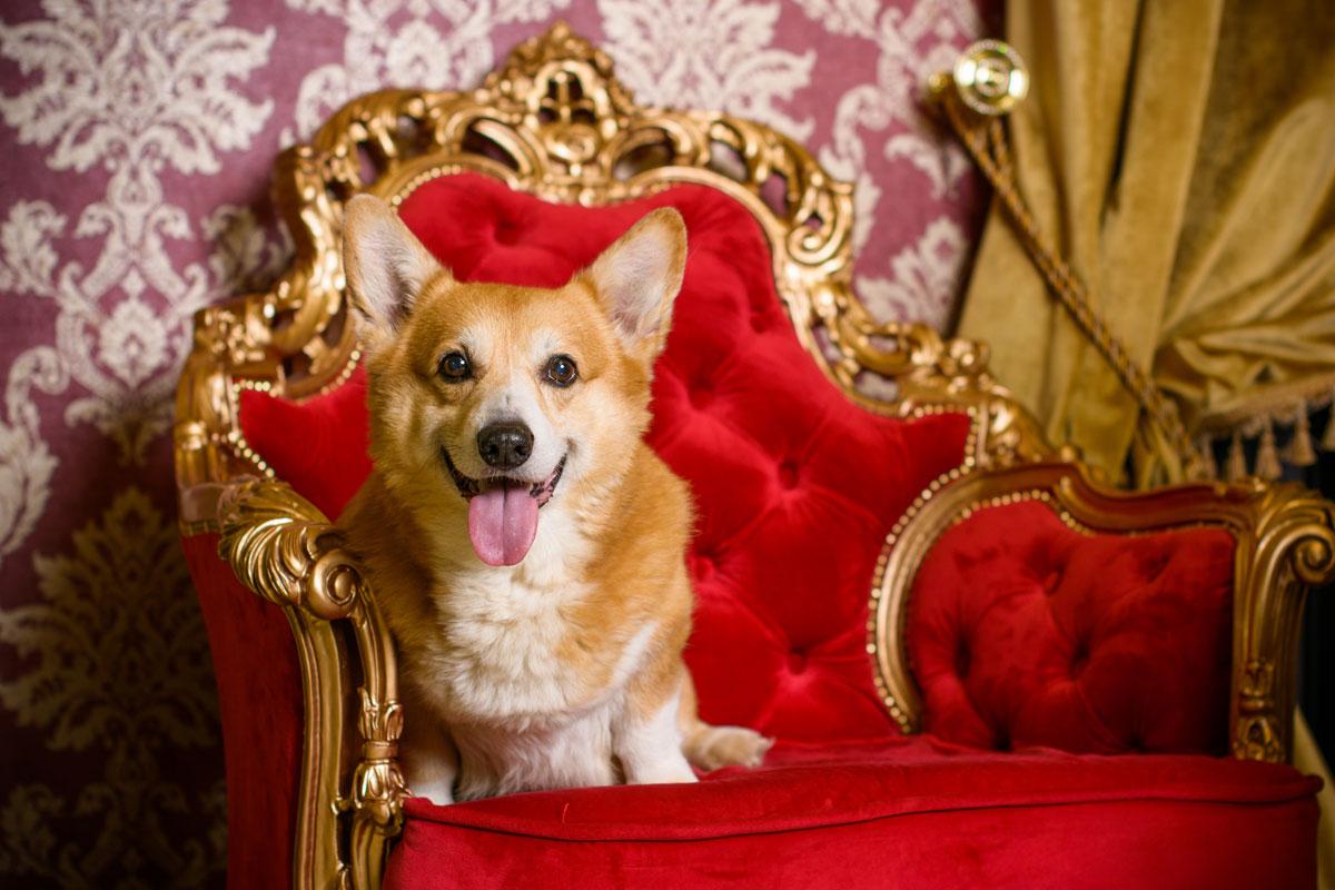 Hunde Der Queen