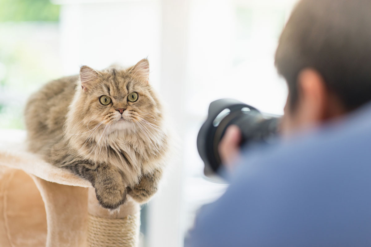 Tipps Fur Tolle Tierfotos Deinetierwelt Magazin