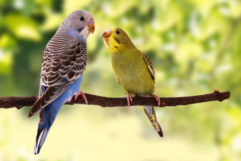 Partnersuche natur