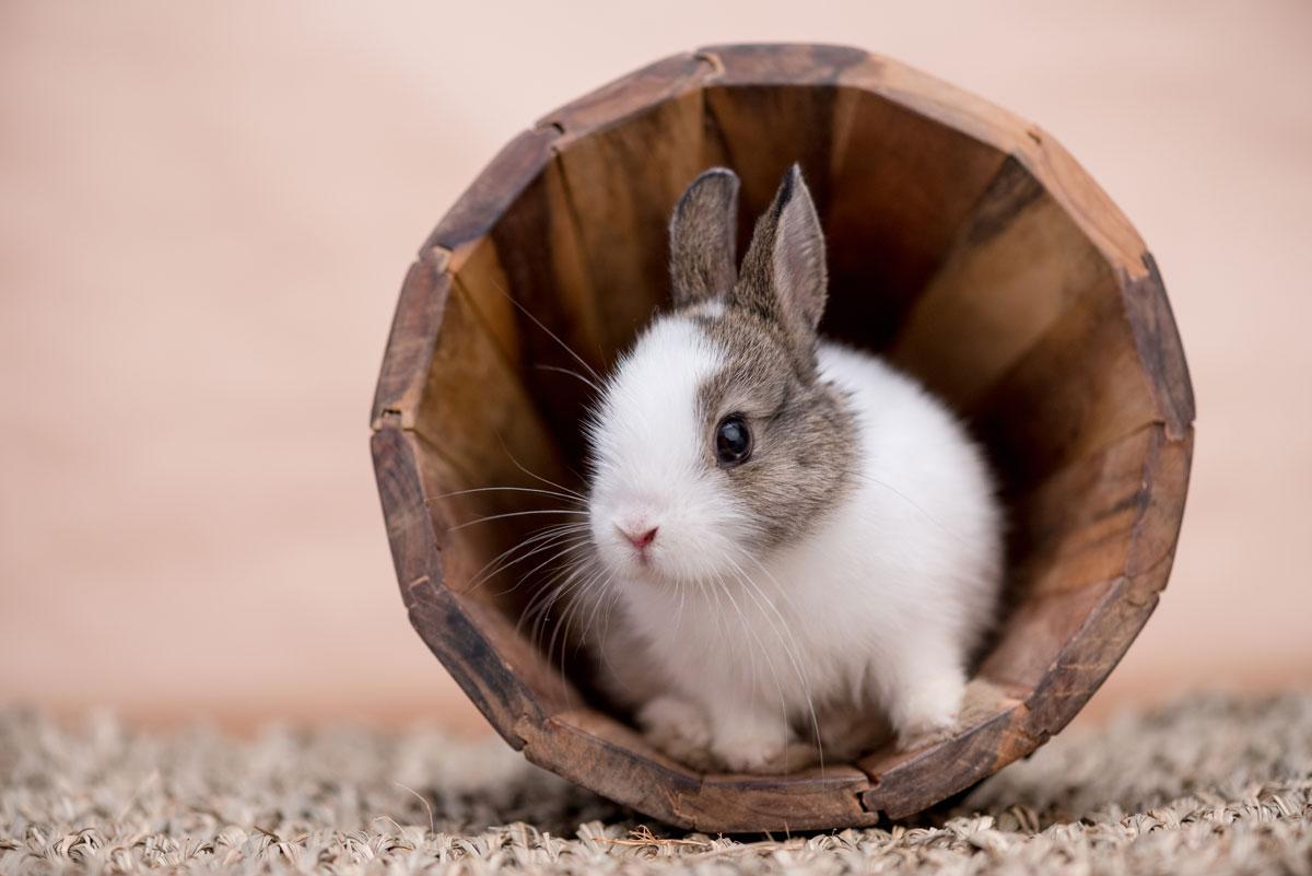 so haltet ihr euer kaninchen auch in der wohnung fit