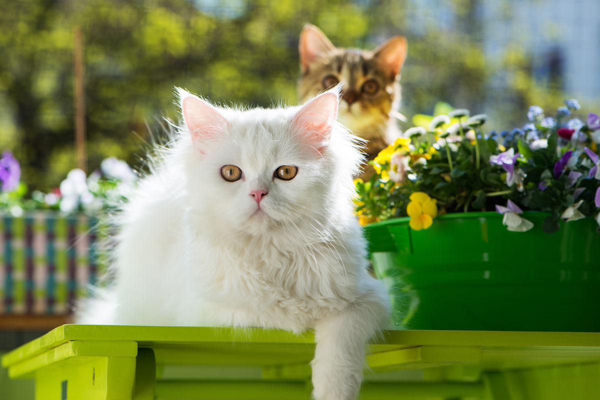 Balkonien Fur Katzen So Wird Euer Balkon Zum Katzenparadies