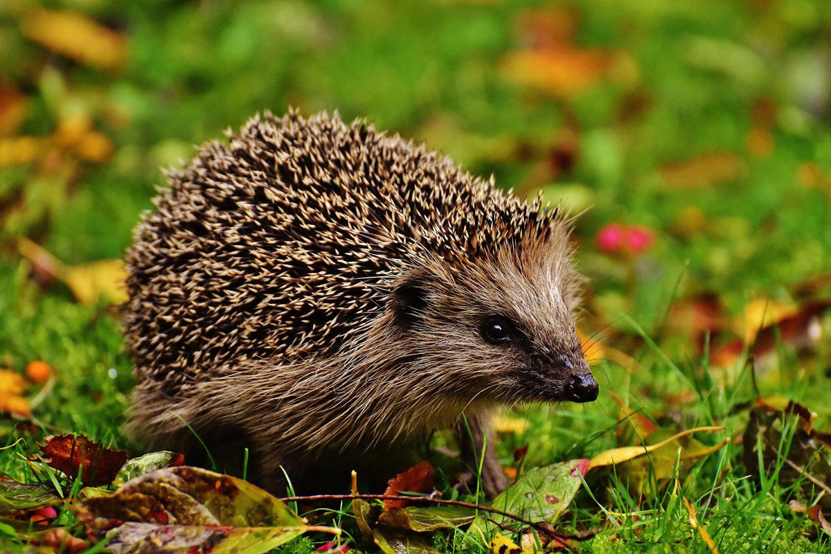 gartenabfälle helfen tieren beim Überwintern