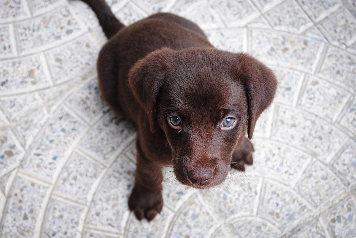 Gewichtsverlust Symptome bei Hunden