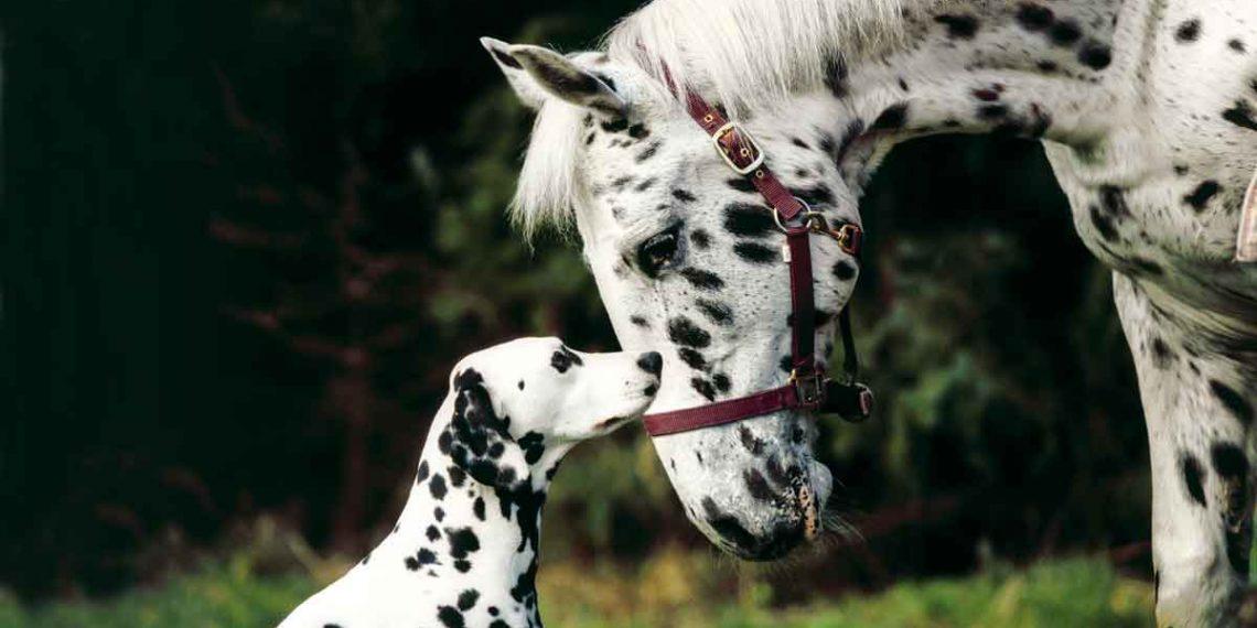 Hund Und Pferd Tickets