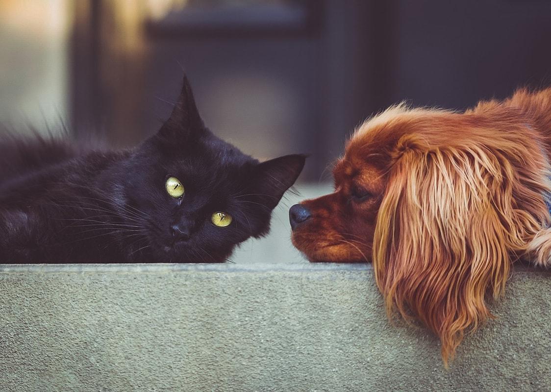 Wurmkur Für Hund Und Katze Alles Was Du Wissen Musst