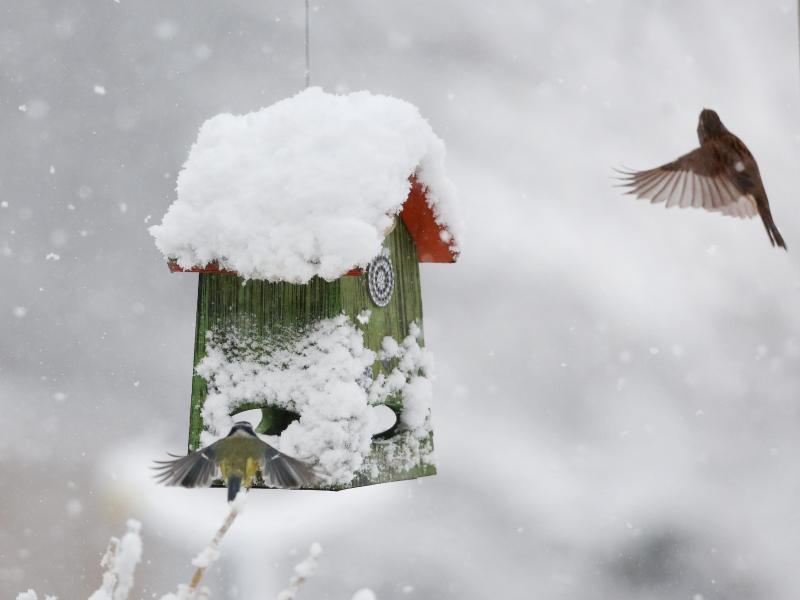 Futterung Im Winter Diese Leckereien Locken Vogel In Den Garten