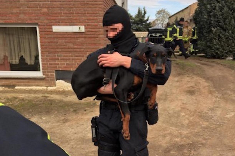 Illegal Kupiert Gequalte Dobermann Welpen In Sachsen Anhalt Befreit