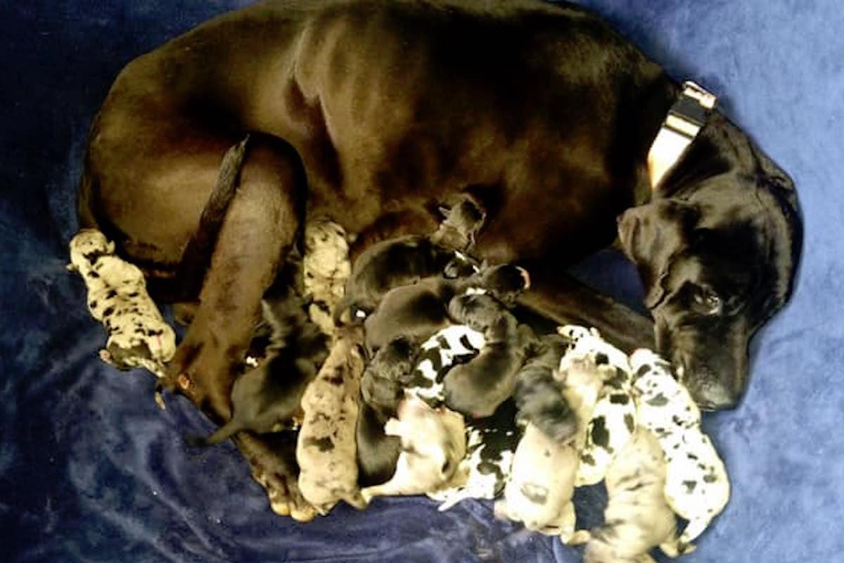 Kaiserschnitt Hund Kosten