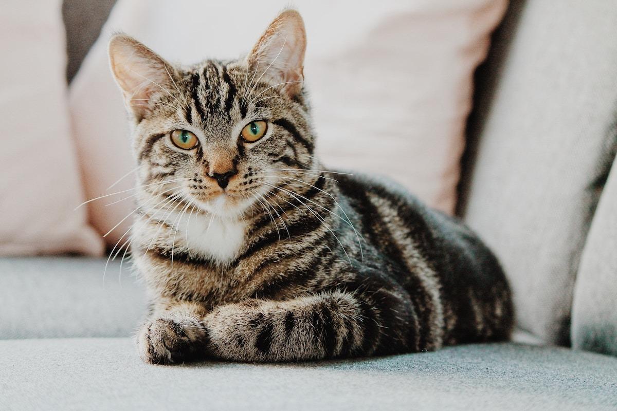 Reagiert Deine Katze nicht auf ihren Namen, will sie Dich nicht hören