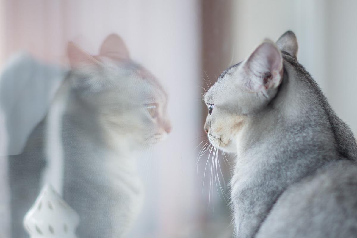Erkennen Sich Katzen Im Spiegel
