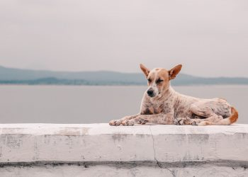So gefährlich ist Leishmaniose für Hunde und Katzen