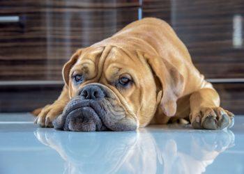 So zeigt Dir Dein Hund, dass er einsam ist