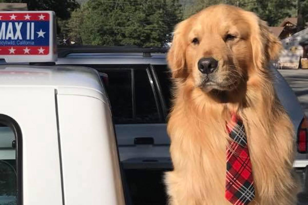 Hund Bürgermeister