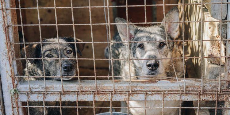 Duisburg Tierheim Hunde Zwei Jahre Von Hundesteuer Befreit
