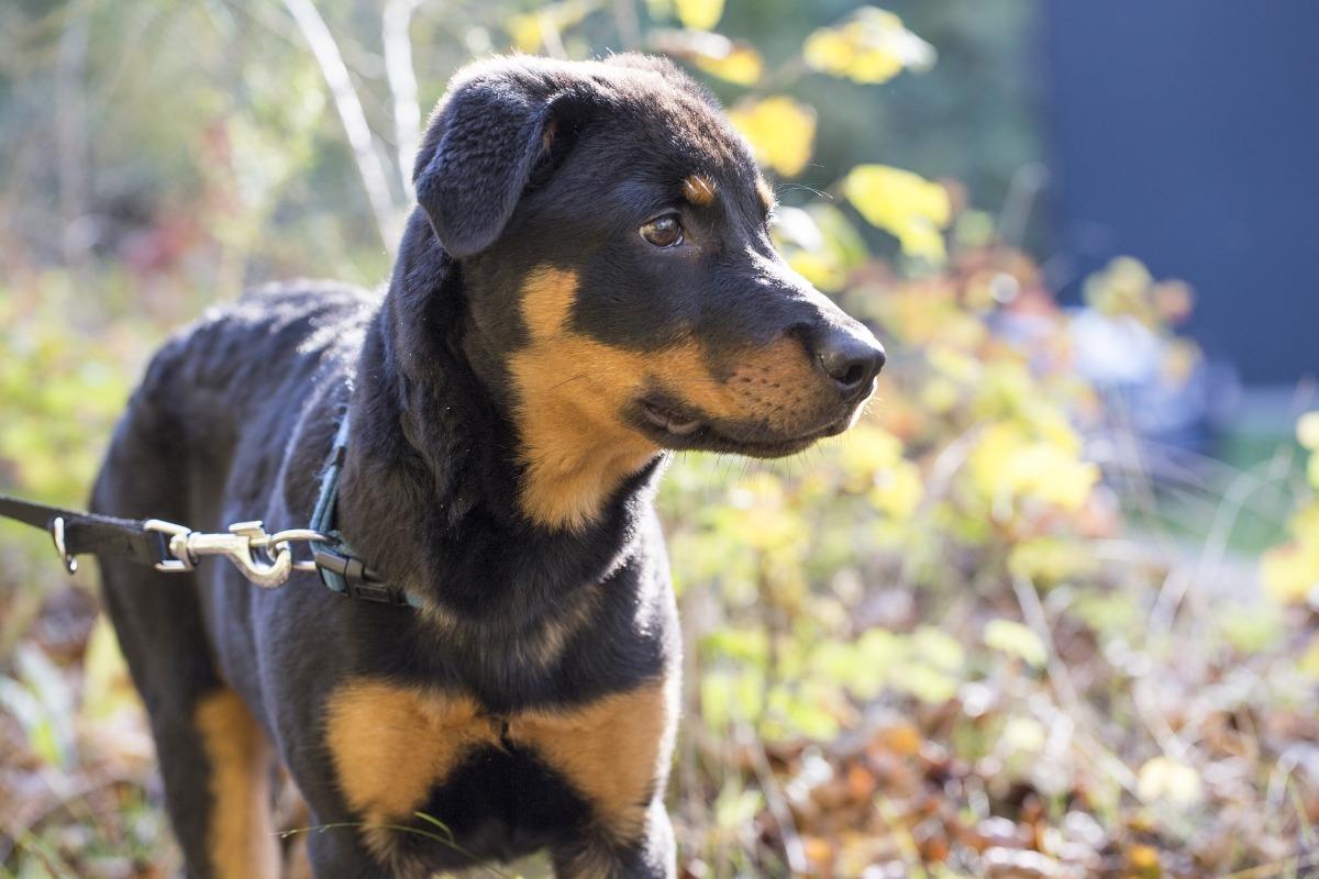 Hundegesetz In Hamburg Deinetierwelt Magazin