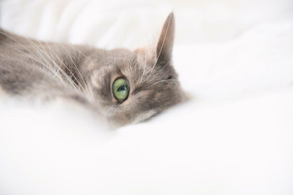 Ivermectin cat