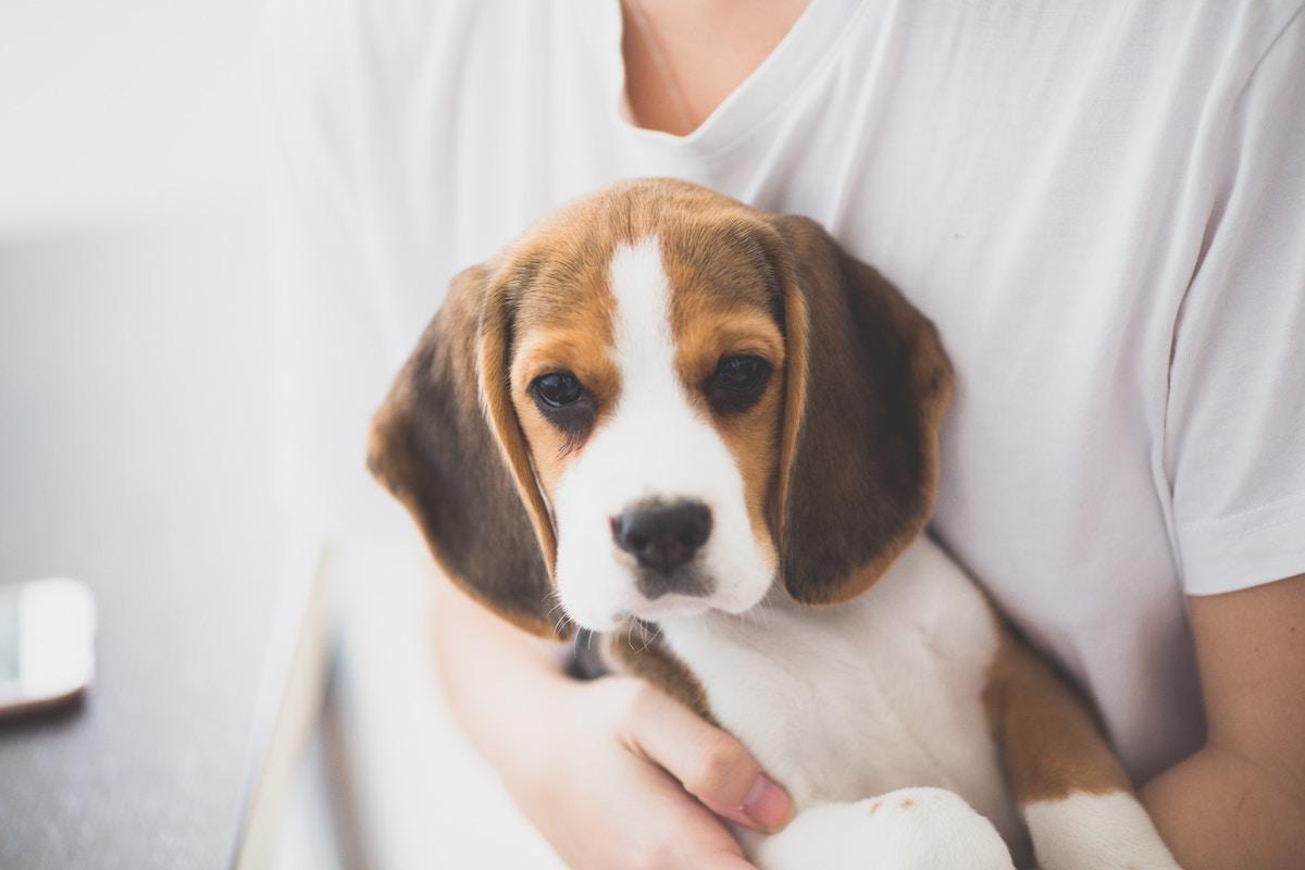 Was Kostet Ein Hund Grundausstattung Und Laufende Kosten Deinetierwelt Magazin