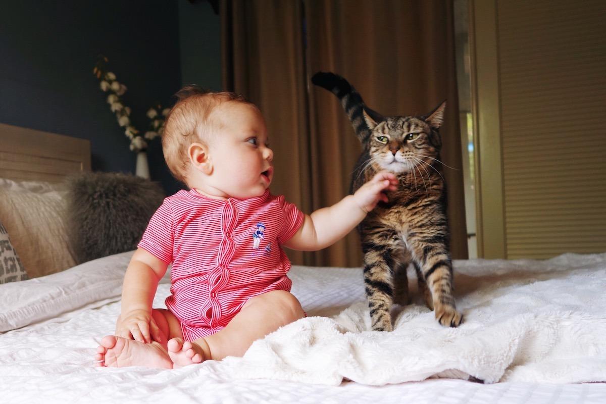 Katze Greift Baby An
