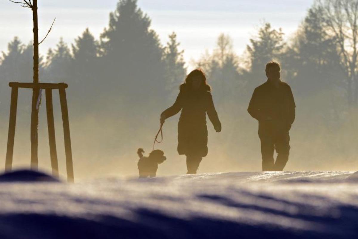 Streit nach der Scheidung: Wer darf den Hund behalten?