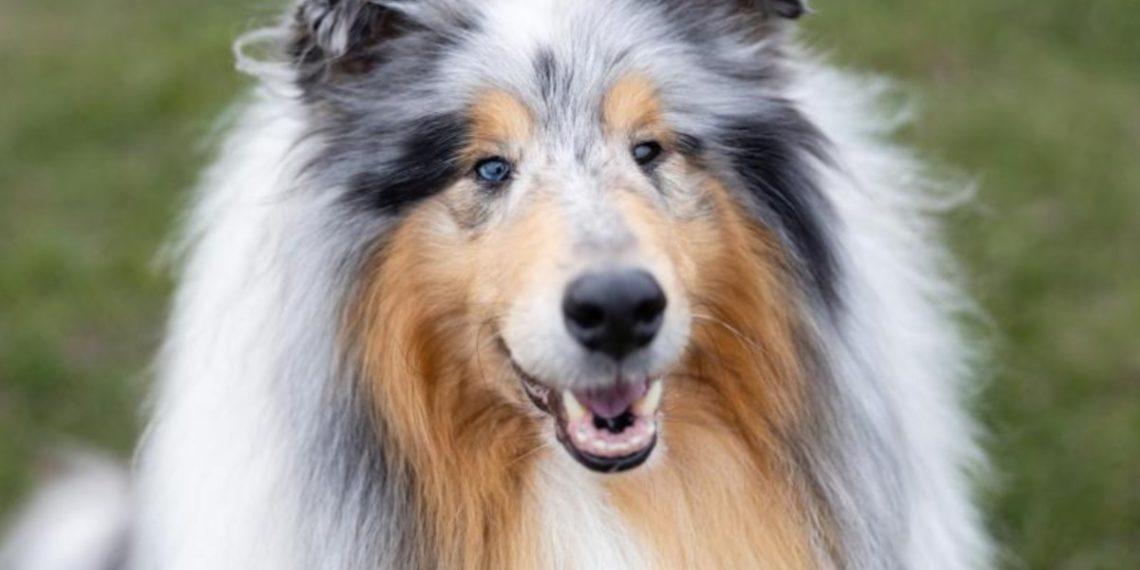 Lassie Im Kino